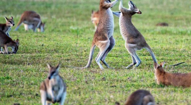 Ce qu'il faut retenir du bras de fer entre Facebook et l'Australie
